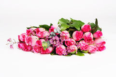 Pink roses. Pile of pink rose blossoms on white background Stock Photo