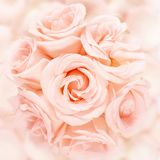 Pink roses. Bouquet arrangement on a pink petals royalty free stock image