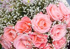 Pink roses. Holidays background from pink roses Stock Image