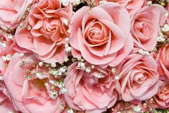 Pink roses. Holidays background from pink roses Stock Images