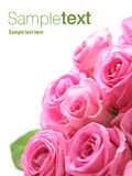 Pink roses. Bouquet of pink roses.  Isolated against a white background.  Room for text