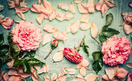 Pink roses arrangements with flowers petal and leaves on turquoise shabby chic background. Top view Stock Photography