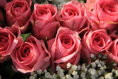 Pink roses and baby breath bouquet Royalty Free Stock Photo