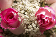 Pink Roses and Baby's Breath in Close Stock Photography