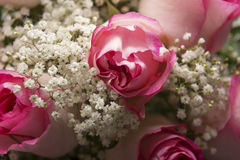 Pink Roses and Baby's Breath Closeup Stock Photos