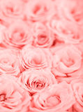 Pink roses background Royalty Free Stock Image