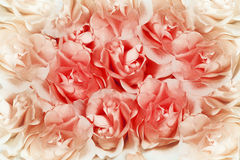 Pink roses background Royalty Free Stock Photos