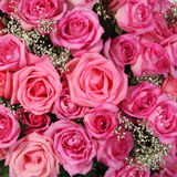 Pink roses. Background Royalty Free Stock Photography