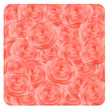 Pink roses background. Stock Photography