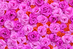 Pink roses background abstract beautiful Royalty Free Stock Photos