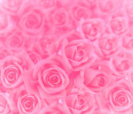 Pink roses background. Beautiful pink roses for background Royalty Free Stock Photography