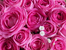 Pink roses. Background with flowers pink roses .Birthday, happy time, Valentines Day royalty free stock photography