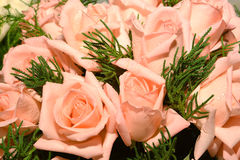 Pink roses. Background image of pink roses Royalty Free Stock Image