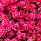 Pink roses background Stock Photo
