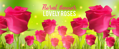 Pink roses background, realistic flowers and green leaves. Aroma rloral vector illustration. Summer banner. Stock Photography
