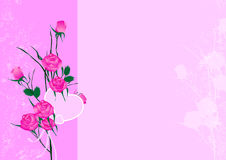 Pink roses background Stock Photos