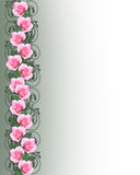 Pink Roses background or template Stock Photography