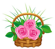 Pink roses in basket Stock Photography