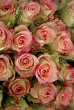 Pink Roses. Beatiful pink Roses for sale in Flower shop Royalty Free Stock Photos