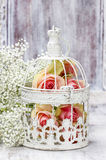 Pink roses in beautiful vintage birdcage. Wedding decor idea Royalty Free Stock Photos