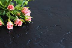 Pink roses on a black background, there is a space for text stock photos