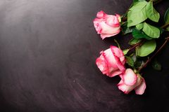 Pink roses on black chalkboard. Happy Women`s Day. Valentine`s Day concept. Present for her stock image