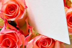 Pink roses with blank visiting card Stock Photos
