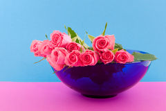 Pink roses on blue Royalty Free Stock Photo