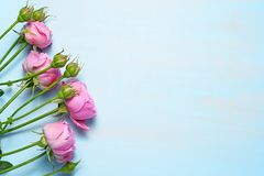 Pink roses on blue Royalty Free Stock Photos