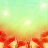 Roses on the blurred background Stock Photo