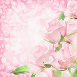 Pink roses bokeh background,  floral corner border Stock Photos