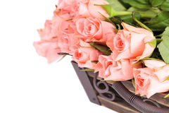 Pink roses border Royalty Free Stock Images
