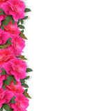 Pink Roses Border Background Royalty Free Stock Image