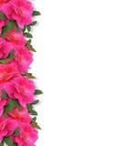Pink Roses Border Background Royalty Free Stock Image