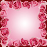 Pink Roses Border Frame Top Side Bottom Royalty Free Stock Photos