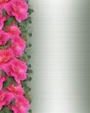 Pink Roses Border Invitation  Stock Image