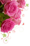 Pink roses bouguet, Stock Image