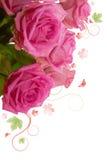 Pink roses bouguet, Stock Image