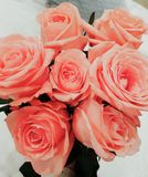 Pink roses. Bouquet royalty free stock photo