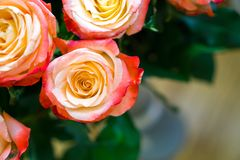 Pink roses in a bouquet stock images