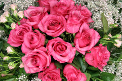 Pink roses, bouquet Royalty Free Stock Photo
