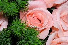 Pink roses bouquet. With green grass Stock Image