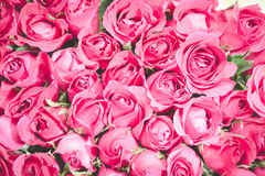 Pink of Roses bouquet background,. Set of Beautiful flower Valentine concept Royalty Free Stock Image