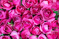 Pink of Roses bouquet background,. Set of Beautiful flower Valentine concept Stock Photography