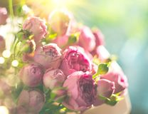 Pink roses bouquet, blooming roses. Rose flowers bunch in sunlight. Pink roses bouquet, blooming roses. Rose flowers bunch in sun light stock image