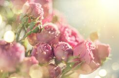 Free Pink Roses Bouquet, Blooming Roses. Rose Flowers Bunch In Sun Light, Nature. Holiday Gift, Bunch Of Roses Flower. Pastel Colours Royalty Free Stock Images - 184008929