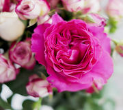 Pink roses bouquet Royalty Free Stock Photography