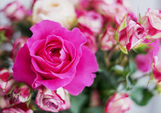 Pink roses bouquet Stock Image