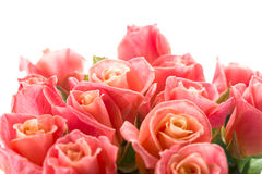 Pink roses bouquet Stock Photos