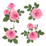 Pink roses bouquet with leaves Stock Photography